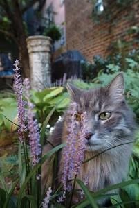 Garden_Cat